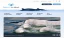 Branché sur les baleines – Baleines en direct affiche de nouvelles couleurs
